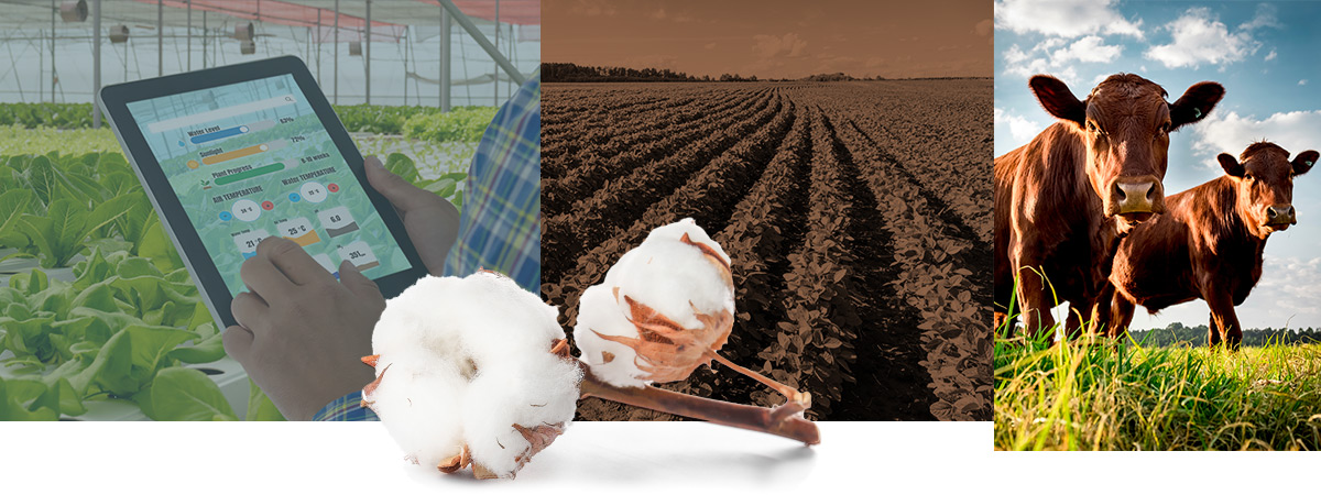 Agricultural Products and Food Production